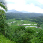 Kauai Drives
