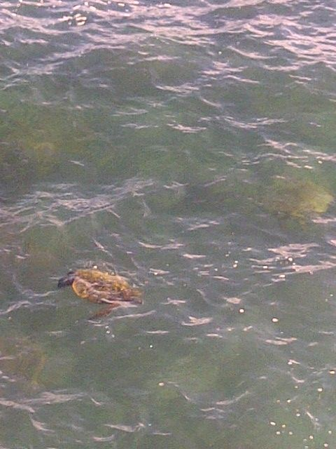 Poipu Shores condo 11