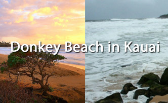 Donkey Beach Kauai Vacation Rentals